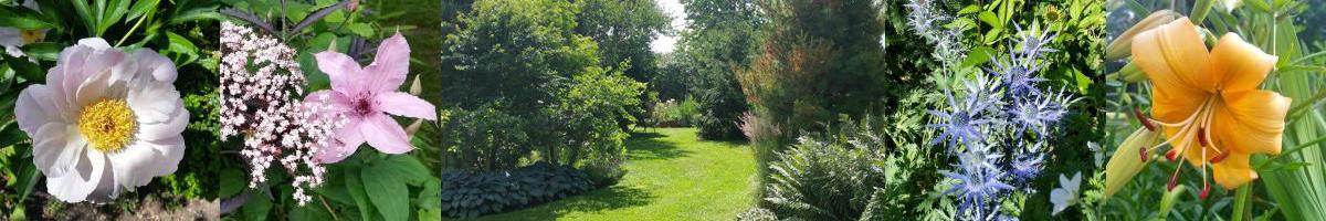 Tilia Trädgård